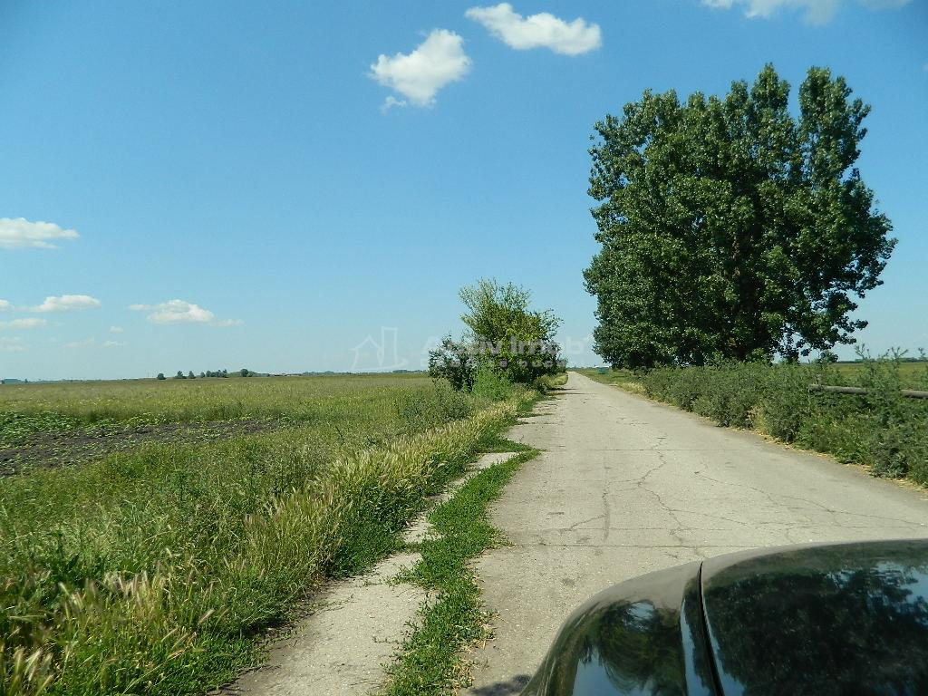 Hale de diverse dimensiuni   2 hectare de teren