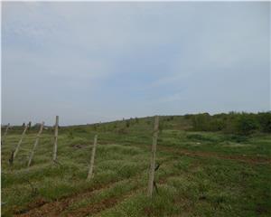 teren extravilan, 15.000 mp, Valea Calugareasca- Primarie