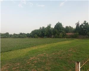 Teren 4,5 ha (45000 mp), sat Zoresti, comuna Vernesti
